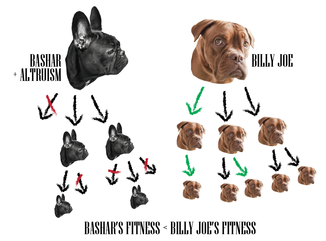 Lovely Fig 3. Bashar Is Feeling Altruistic And Gives Half Of The Food He Collects  To Billy Joeu0027s Pups. The Result Is Less Food For His Own Pups, Meaning Less  Of ...